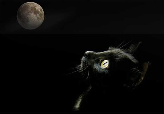 gato-negro pa.jpg