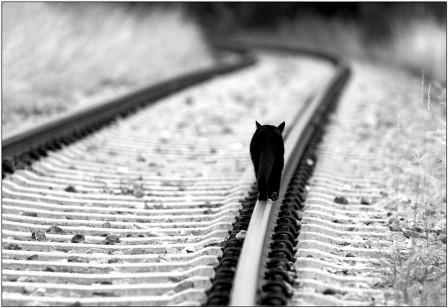 vias_del_tren.jpg