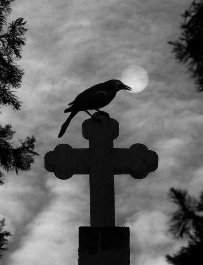 535ff614e9d2dc59e81c413327c913c7--raven-art-crow-art.jpg